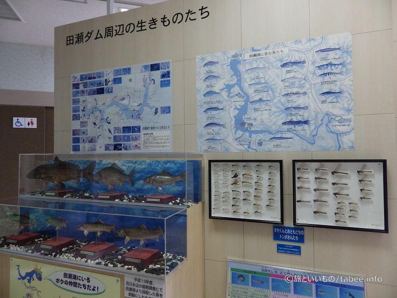 田瀬湖の生き物たち