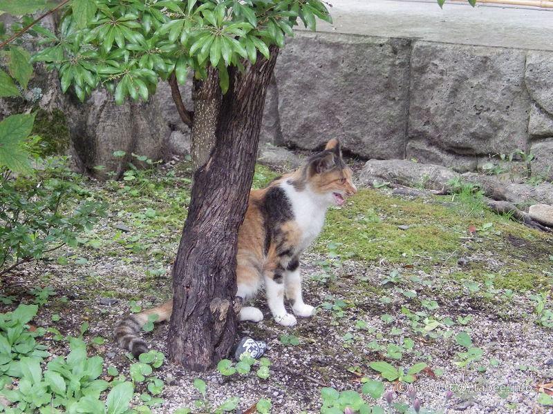 伝承園が縄張りの猫のようです