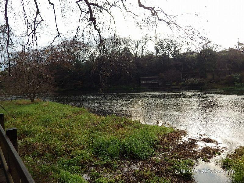 柿田川の流れ