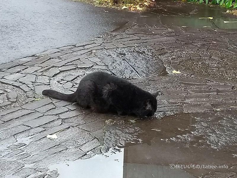 柿田川公園の猫
