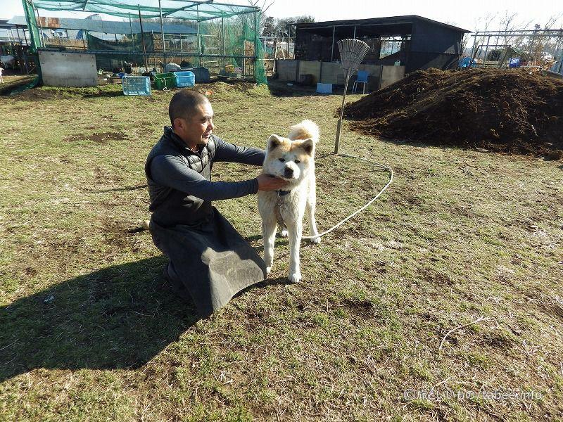 秋田犬のカイと牧場主の麓(ふもと)さん