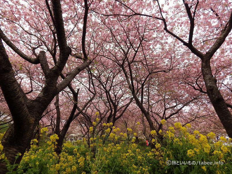 春の色満載
