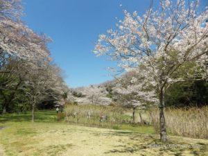 春の花鑑賞会