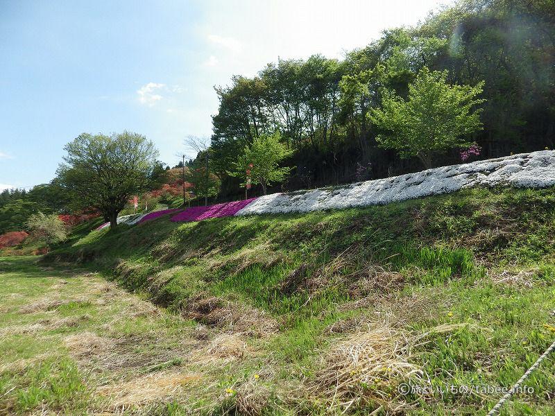 芝桜の斜面もありました