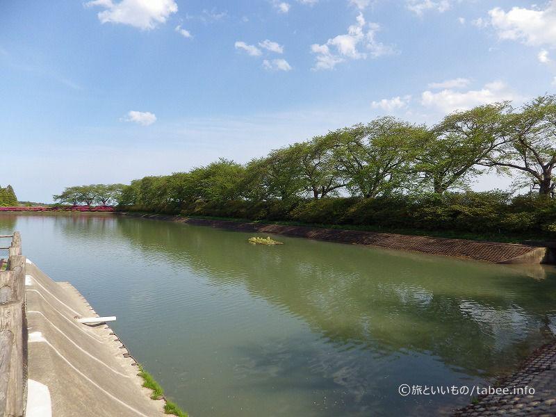 池の周囲には桜の木
