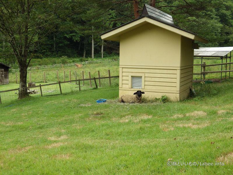 羊は軒下が好きなようです