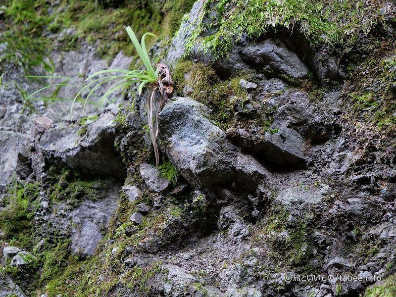 火山っぽい石