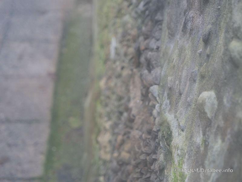 海岸の岩に貝が張り付いてる感じにも見えます