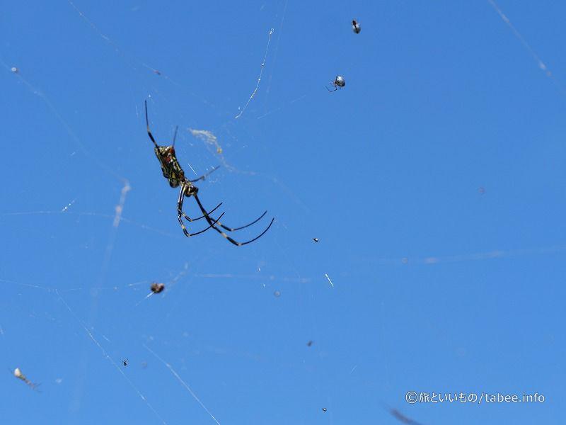 柵にいた銀色の小さい蜘蛛