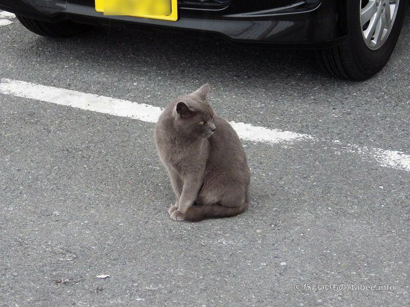 ネコがいました