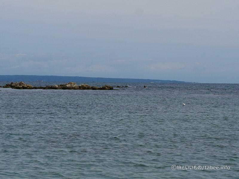 能登島ではイルカが見れる時があるそうですよ