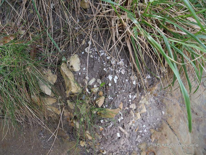 貝殻の地層