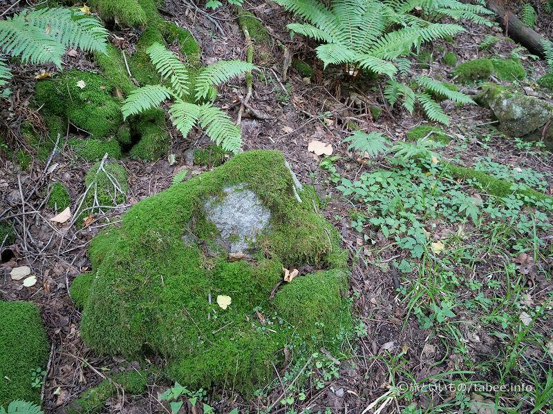 苔むした岩が特徴的です