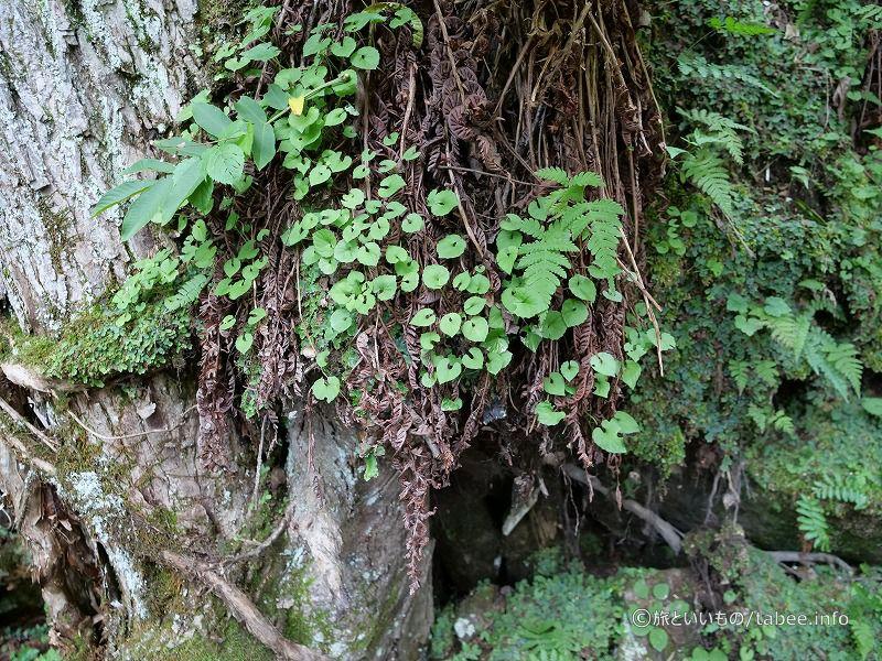 賑やかな木