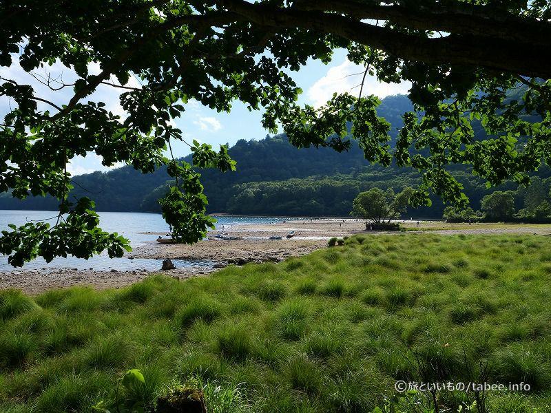 木の隙間から眺める丸沼