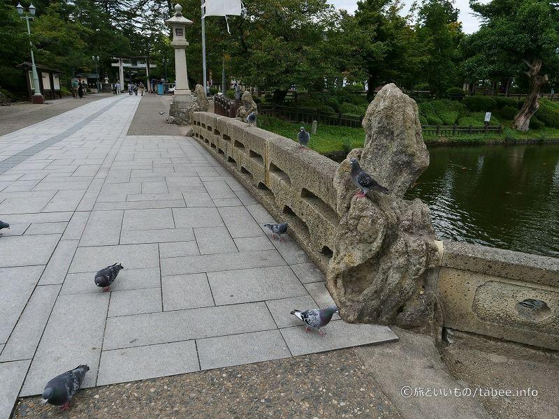 鳩も沢山います