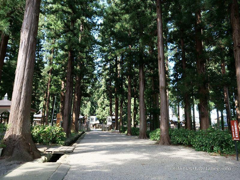杉並木の奥へ