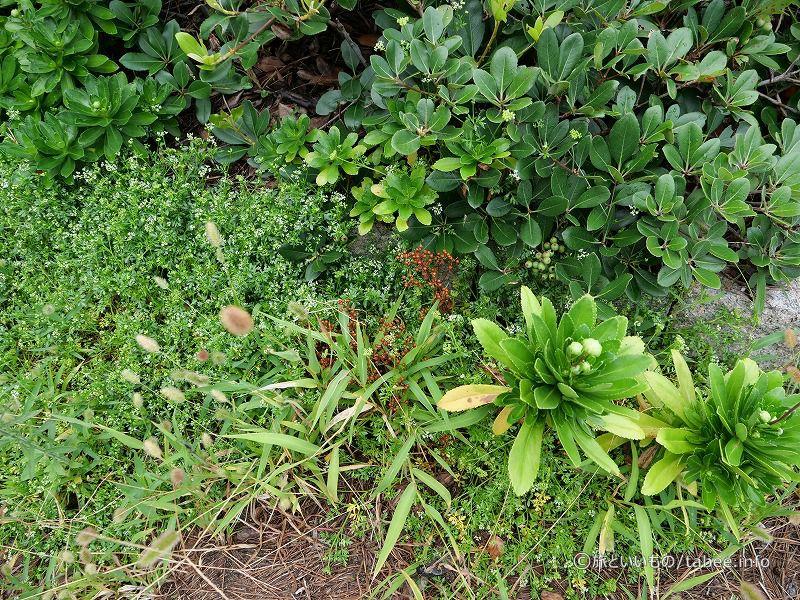 遊歩道の植物たち