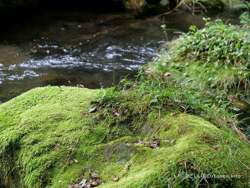岩の上の植物生き残り選手権