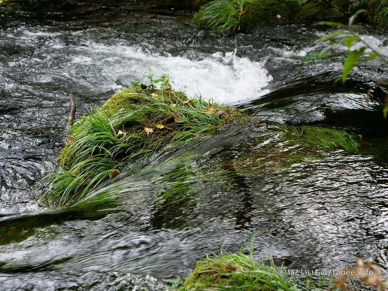 水流の中でも頑張る草たち