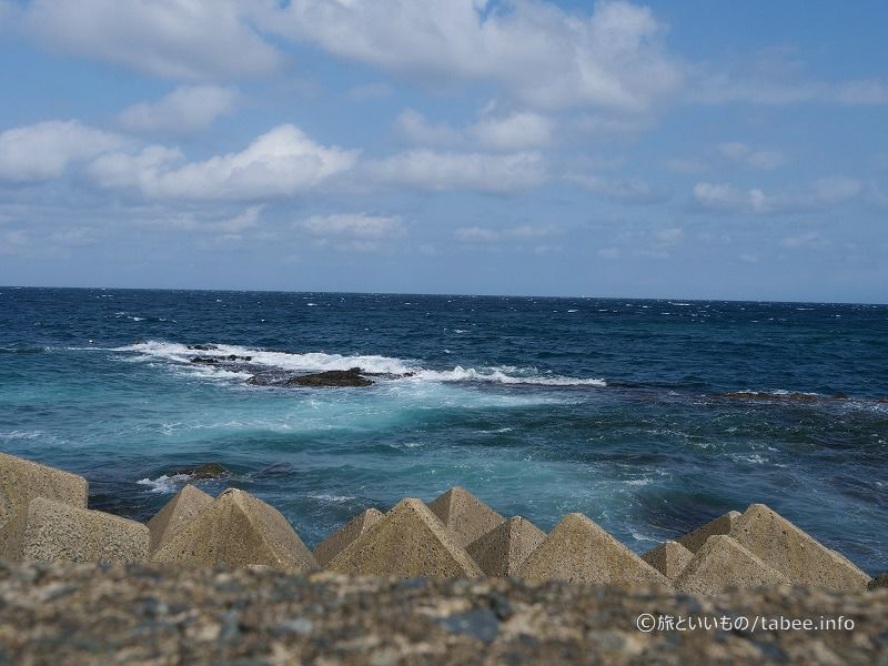 本マグロの海